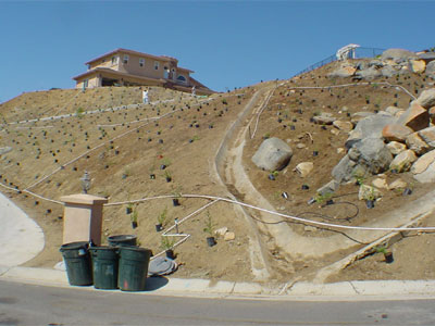 The nativeplants stabilize steep slopes