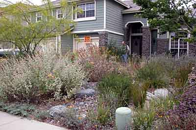 From lawn to a native landscape