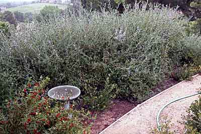 Bird baths are an essential part of the native habitat