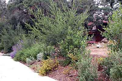 California Native Landscapes Past Installations