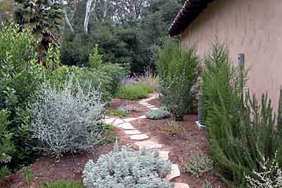 Flagstone path through a woodland garden