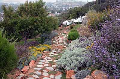 Stone pathway planted in thyme